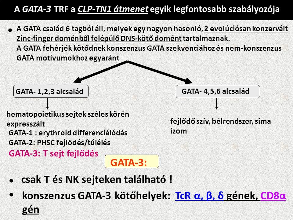 A GATA-3 TRF a CLP-TN1 átmenet egyik legfontosabb szabályozója A GATA család 6 tagból áll, melyek egy nagyon hasonló, 2 evolúciósan konzervált Zinc-fi