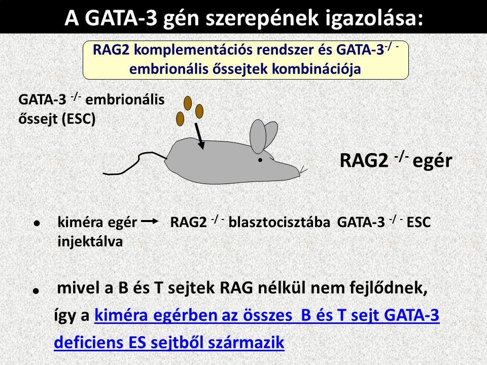kiméra egér RAG2 -/ - blasztocisztába GATA-3 -/ - ESC injektálva mivel a B és T sejtek RAG nélkül nem fejlődnek, így a kiméra egérben az összes B és T