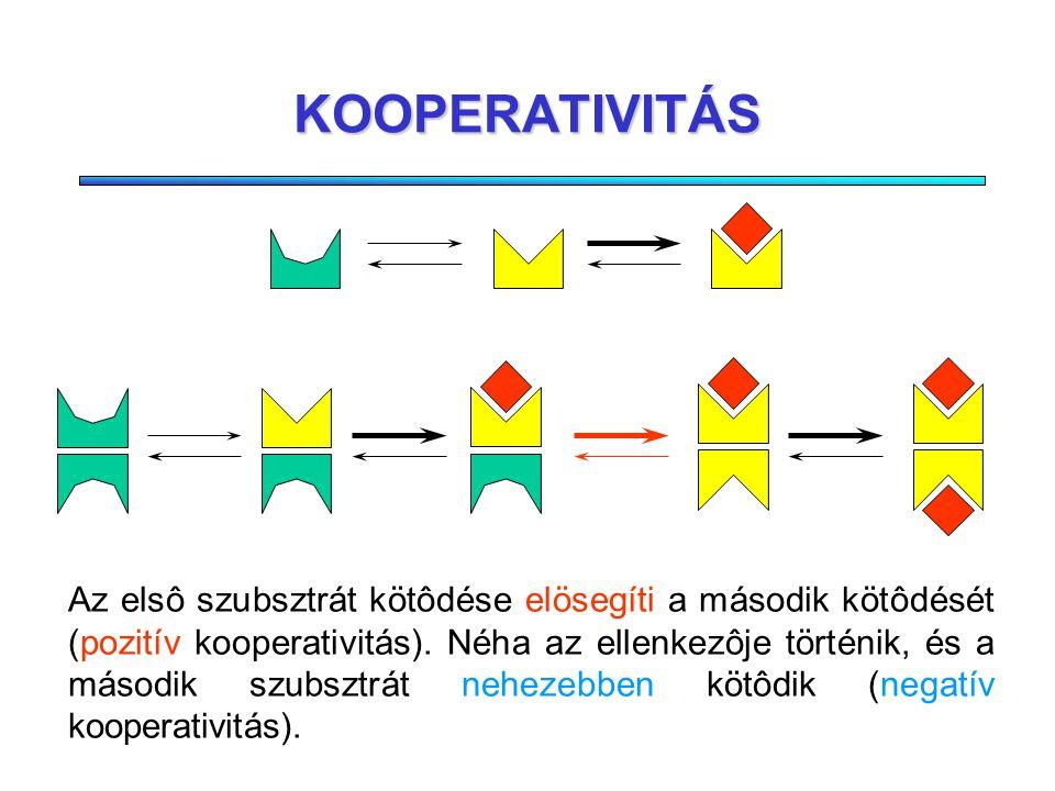 SZIGMOID KINETIKA Szubsztrát koncentráció Reakciósebesség Gyakran elôfordul oligomér enzimeknél, amelyek több alegységbôl állnak (egy komplexben több aktív centrum)