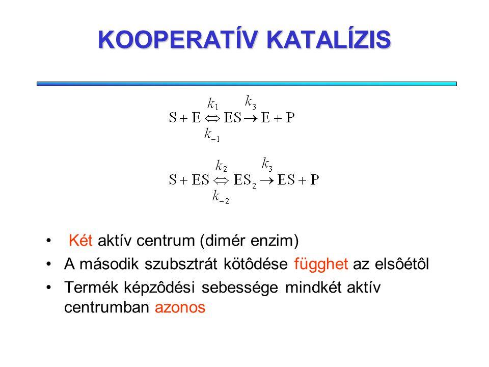 A HILL-EGYÜTTHATÓ A Hill-együttható jelzi, hogy a kötôdés mennyire kooperatív. Ha n=1, akkor nincs kooperativitás, n>1 esetén a kötôdési egyensúly meg