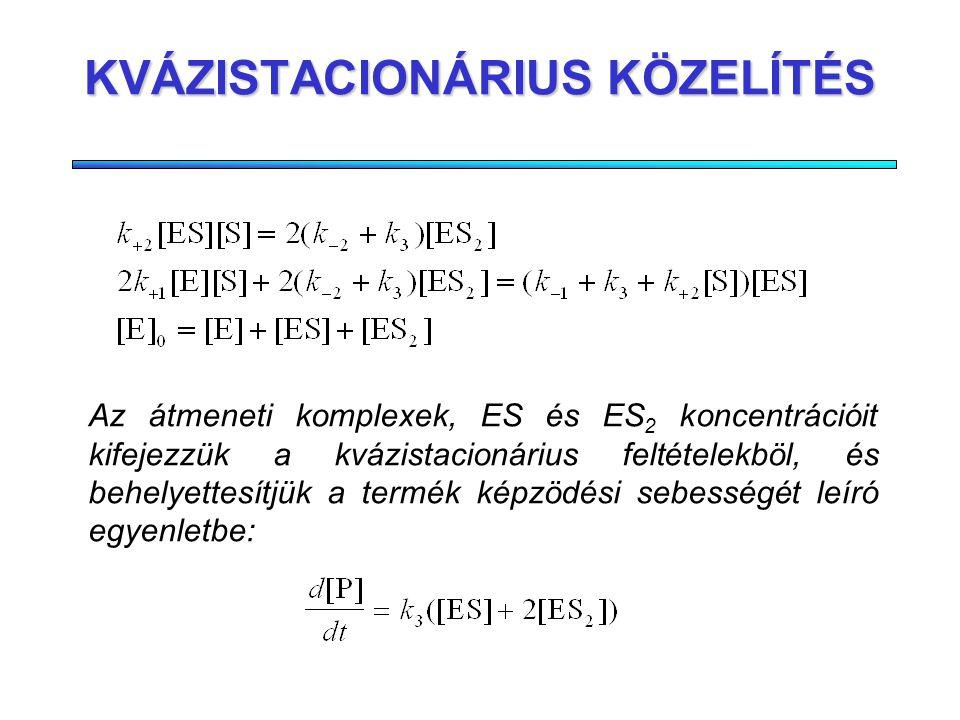 KOOPERATÍV KATALÍZIS Két aktív centrum (dimér enzim) A második szubsztrát kötôdése függhet az elsôétôl Termék képzôdési sebessége mindkét aktív centrumban azonos