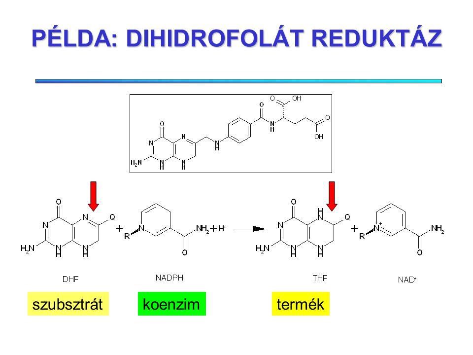 AZ ENZIMEK: KATALITIKUS HATÁSÚ FEHÉRJÉK SzubsztrátokTermékek Effektor Aktiválás/gátlás Hatékonyabbak a kémiai katalizátoroknál Aktivitásuk szabályozható Enzim N H N N N H Q O NH 2 + R NNH 2 O + H + N H N H N N H Q O NH 2 + R N + NH 2 O +