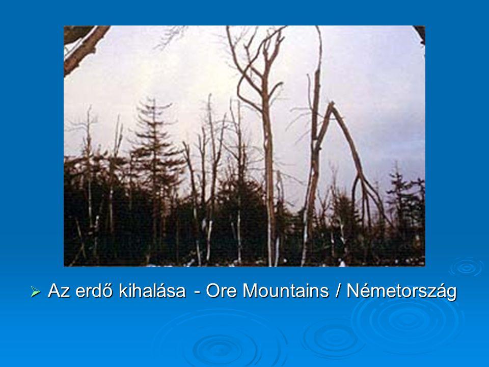  Az erdő kihalása - Ore Mountains / Németország