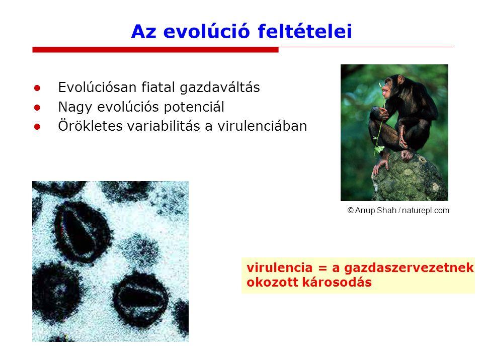 Az evolúció feltételei Evolúciósan fiatal gazdaváltás Nagy evolúciós potenciál Örökletes variabilitás a virulenciában © Anup Shah / naturepl.com virulencia = a gazdaszervezetnek okozott károsodás