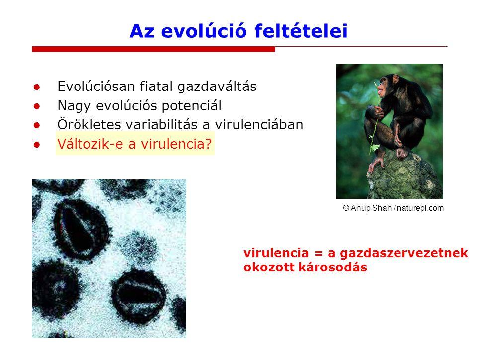 Az evolúció feltételei Evolúciósan fiatal gazdaváltás Nagy evolúciós potenciál Örökletes variabilitás a virulenciában Változik-e a virulencia.