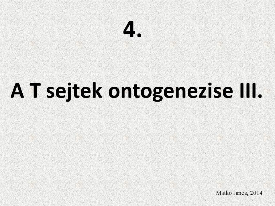 A T sejtek ontogenezise III. Matkó János, 2014 4.