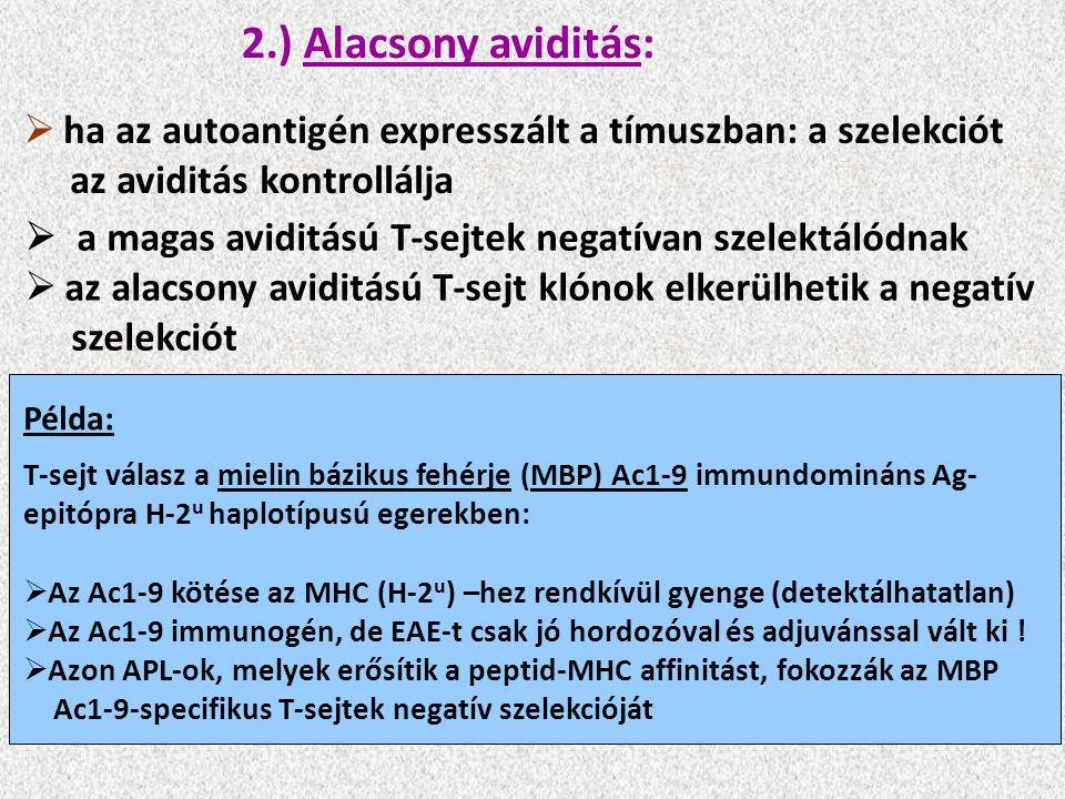2.) Alacsony aviditás:  ha az autoantigén expresszált a tímuszban: a szelekciót az aviditás kontrollálja  a magas aviditású T-sejtek negatívan szelektálódnak  az alacsony aviditású T-sejt klónok elkerülhetik a negatív szelekciót Példa: T-sejt válasz a mielin bázikus fehérje (MBP) Ac1-9 immundomináns Ag- epitópra H-2 u haplotípusú egerekben:  Az Ac1-9 kötése az MHC (H-2 u ) –hez rendkívül gyenge (detektálhatatlan)  Az Ac1-9 immunogén, de EAE-t csak jó hordozóval és adjuvánssal vált ki .