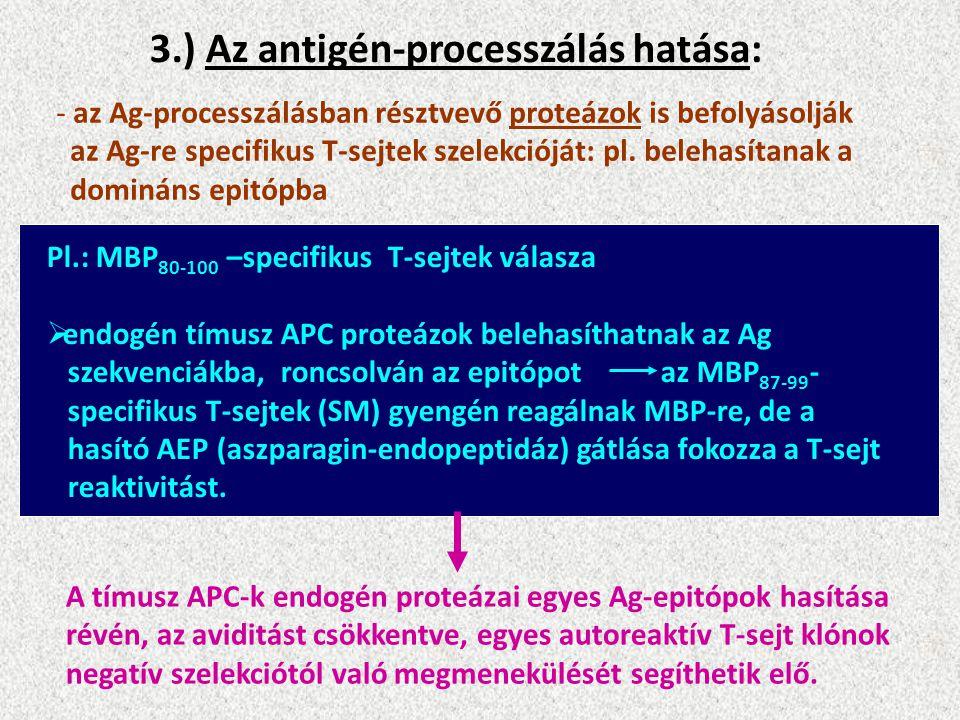 3.) Az antigén-processzálás hatása: - az Ag-processzálásban résztvevő proteázok is befolyásolják az Ag-re specifikus T-sejtek szelekcióját: pl.
