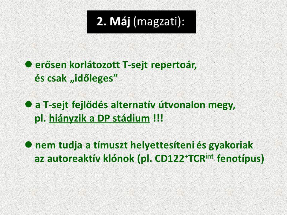 """2. Máj (magzati): erősen korlátozott T-sejt repertoár, és csak """"időleges"""" a T-sejt fejlődés alternatív útvonalon megy, pl. hiányzik a DP stádium !!! n"""