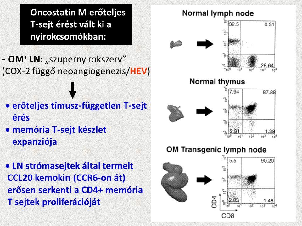 """Oncostatin M erőteljes T-sejt érést vált ki a nyirokcsomókban: - OM + LN: """"szupernyirokszerv (COX-2 függő neoangiogenezis/HEV)  erőteljes tímusz-független T-sejt érés  memória T-sejt készlet expanziója  LN strómasejtek által termelt CCL20 kemokin (CCR6-on át) erősen serkenti a CD4+ memória T sejtek proliferációját"""