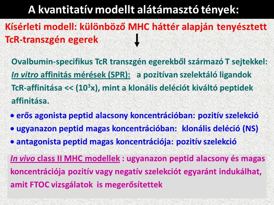 In vivo class II MHC modellek : ugyanazon peptid alacsony és magas koncentrációja pozitív vagy negatív szelekciót egyaránt indukálhat, amit FTOC vizsgálatok is megerősítettek Kísérleti modell: különböző MHC háttér alapján tenyésztett TcR-transzgén egerek  erős agonista peptid alacsony koncentrációban: pozitív szelekció  ugyanazon peptid magas koncentrációban: klonális deléció (NS)  antagonista peptid magas koncentrációja: pozitív szelekció Ovalbumin-specifikus TcR transzgén egerekből származó T sejtekkel: In vitro affinitás mérések (SPR): a pozitívan szelektáló ligandok TcR-affinitása << (10 3 x), mint a klonális deléciót kiváltó peptidek affinitása.