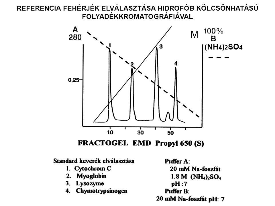 HIDROFÓB KÖLCSÖNHATÁSÚ KROMATOGRÁFIA FEHÉRJÉK OVALBUMINRA VONATKOZTATOTT RELATIV RETENCIÓK PROTEINRRT Cytochrome C0.59 Myoglobin0.73 Ribonuclease A0.76 Haemoglobin0.91 Albumin (human)0.94 Ovalbumin1.00 Trypsinogen1.02 Transferrin1.07 Lysozyme1.08 Albumin (bovine serum)1.11 α-Chymotrypsinogen A1.12 Pepsin1.15 Trypsin inhibitor1.23