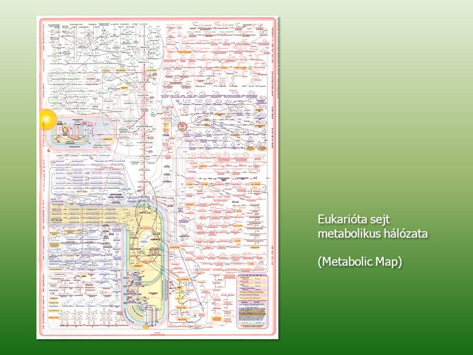 Eukarióta sejt metabolikus hálózata (Metabolic Map) Eukarióta sejt metabolikus hálózata (Metabolic Map)