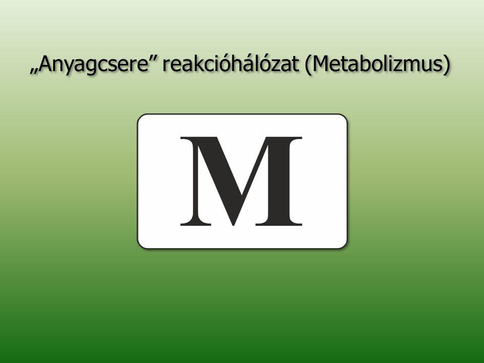 """""""Anyagcsere"""" reakcióhálózat (Metabolizmus)"""