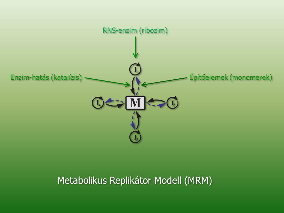 RNS-enzim (ribozim) Építőelemek (monomerek) Enzim-hatás (katalízis) Metabolikus Replikátor Modell (MRM)
