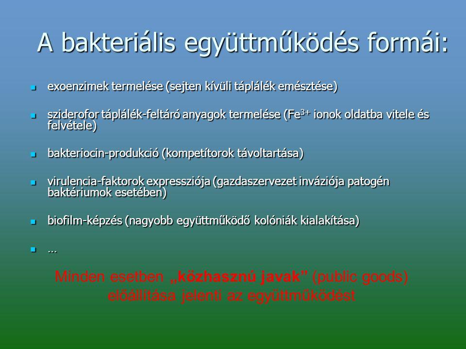 A bakteriális együttműködés formái: exoenzimek termelése (sejten kívüli táplálék emésztése) exoenzimek termelése (sejten kívüli táplálék emésztése) sz