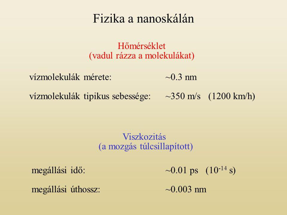 Tunneling nanotubes (TNTs) vesesejtek és agysejtek között [Rustom et al., Science 303, 1007 (2004)]