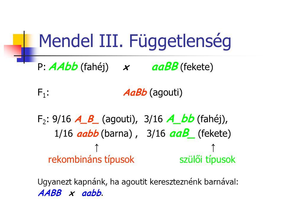 Mendel III. Függetlenség P: AAbb (fahéj) x aaBB (fekete) F 1 : AaBb (agouti) F 2 : 9/16 A_B_ (agouti), 3/16 A_bb (fahéj), 1/16 aabb (barna), 3/16 aaB_