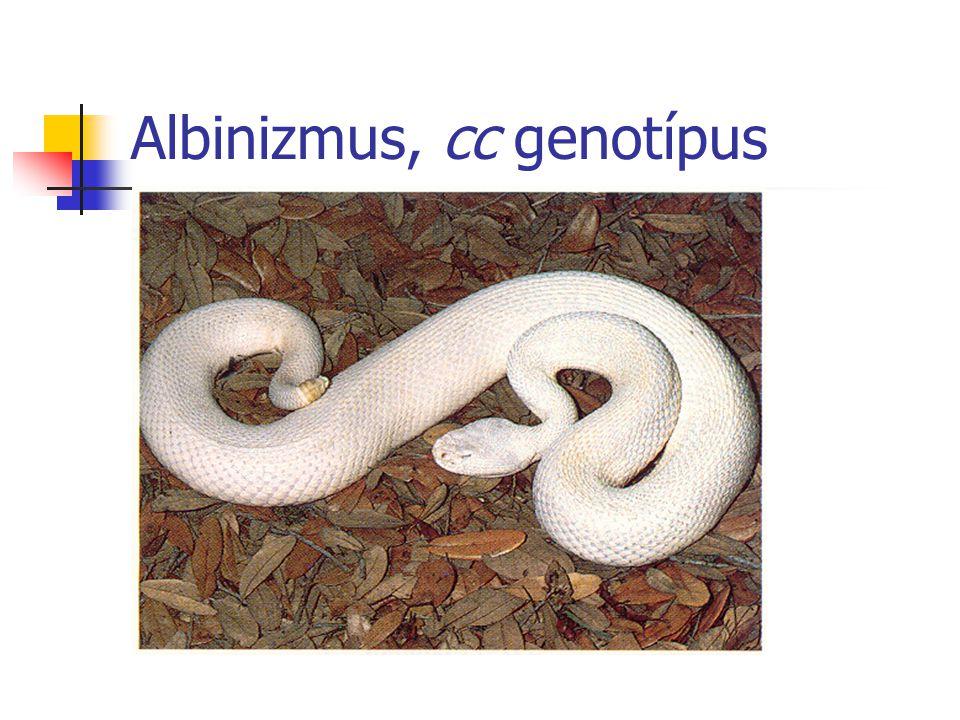 Albinizmus, cc genotípus