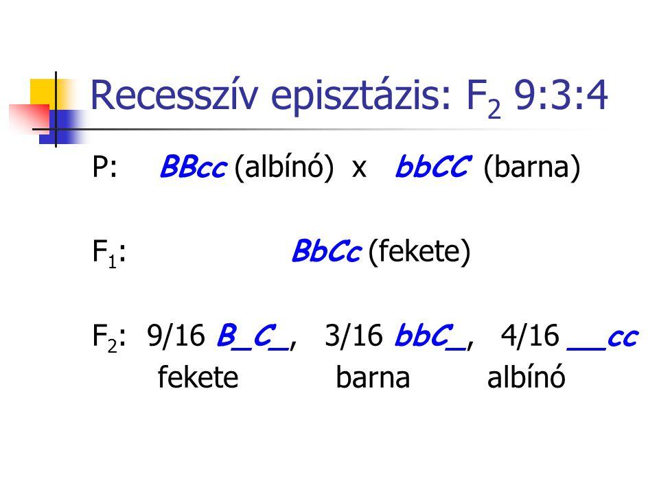 Recesszív episztázis: F 2 9:3:4 P: BBcc (albínó) x bbCC (barna) F 1 : BbCc (fekete) F 2 : 9/16 B_C_, 3/16 bbC_, 4/16 __cc fekete barnaalbínó