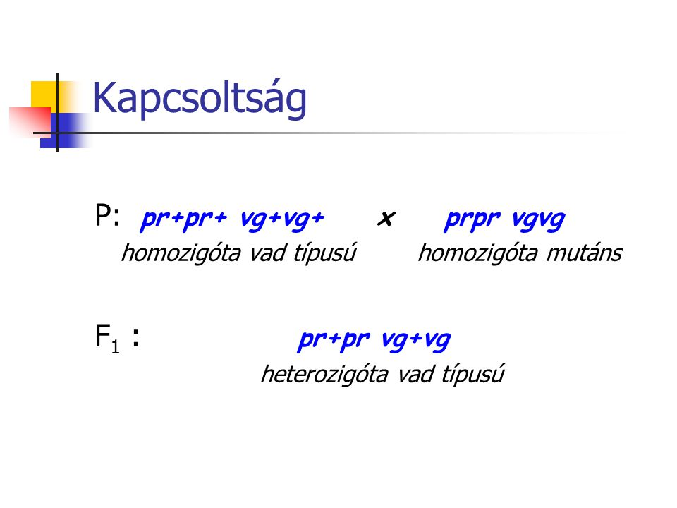 Kapcsoltság P: pr+pr+ vg+vg+ x prpr vgvg homozigóta vad típusú homozigóta mutáns F 1 : pr+pr vg+vg heterozigóta vad típusú