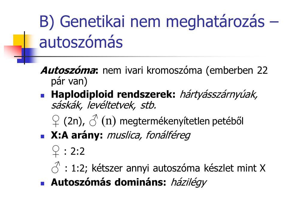 B) Genetikai nem meghatározás – autoszómás Autoszóma: nem ivari kromoszóma (emberben 22 pár van) Haplodiploid rendszerek: hártyásszárnyúak, sáskák, le