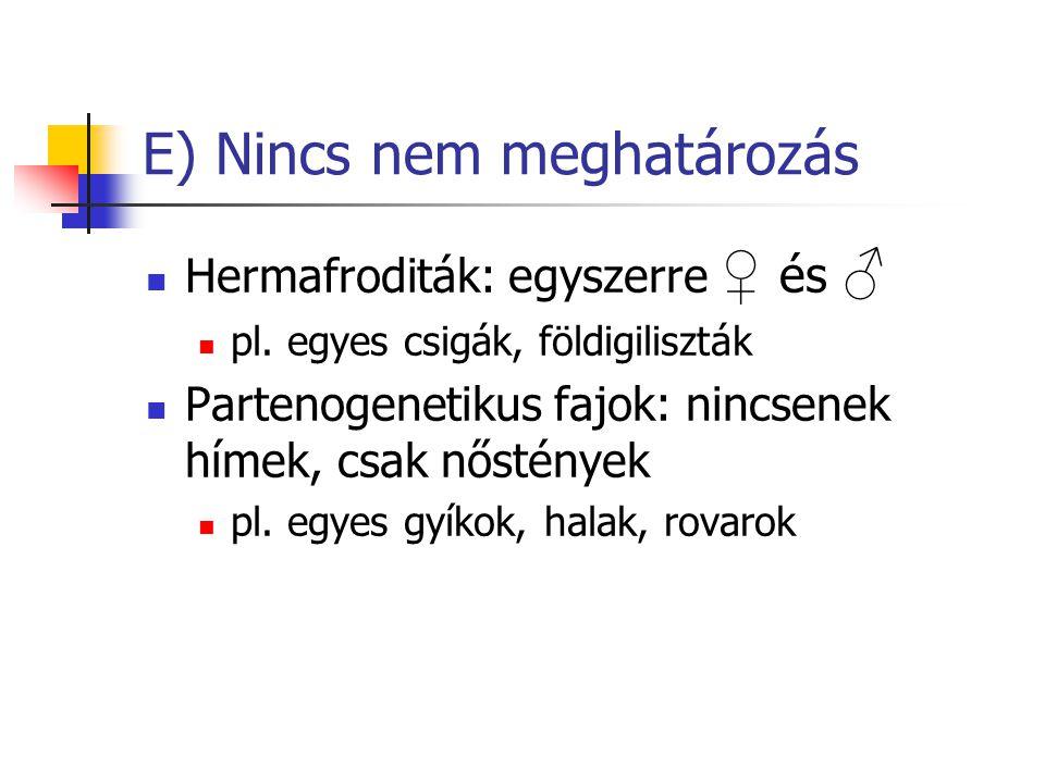 E) Nincs nem meghatározás Hermafroditák: egyszerre ♀ és ♂ pl. egyes csigák, földigiliszták Partenogenetikus fajok: nincsenek hímek, csak nőstények pl.