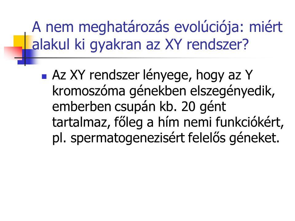A nem meghatározás evolúciója: miért alakul ki gyakran az XY rendszer? Az XY rendszer lényege, hogy az Y kromoszóma génekben elszegényedik, emberben c