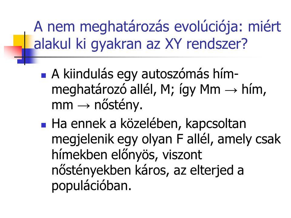 A nem meghatározás evolúciója: miért alakul ki gyakran az XY rendszer? A kiindulás egy autoszómás hím- meghatározó allél, M; így Mm → hím, mm → nőstén