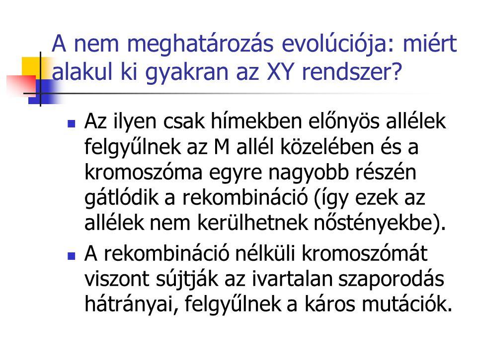 A nem meghatározás evolúciója: miért alakul ki gyakran az XY rendszer? Az ilyen csak hímekben előnyös allélek felgyűlnek az M allél közelében és a kro