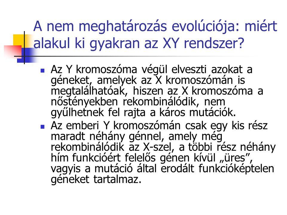 A nem meghatározás evolúciója: miért alakul ki gyakran az XY rendszer? Az Y kromoszóma végül elveszti azokat a géneket, amelyek az X kromoszómán is me