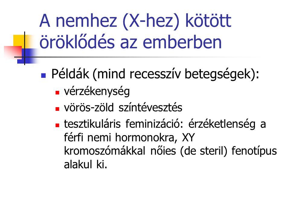 A nemhez (X-hez) kötött öröklődés az emberben Példák (mind recesszív betegségek): vérzékenység vörös-zöld színtévesztés tesztikuláris feminizáció: érz