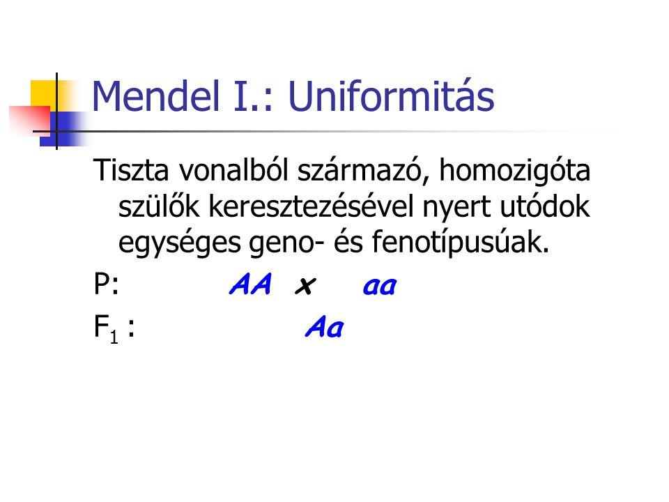 Mendel I.: Uniformitás Tiszta vonalból származó, homozigóta szülők keresztezésével nyert utódok egységes geno- és fenotípusúak. P: AAxaa F 1 : Aa