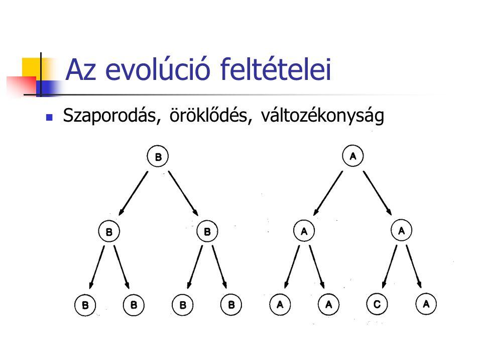 Az evolúció feltételei Szaporodás, öröklődés, változékonyság