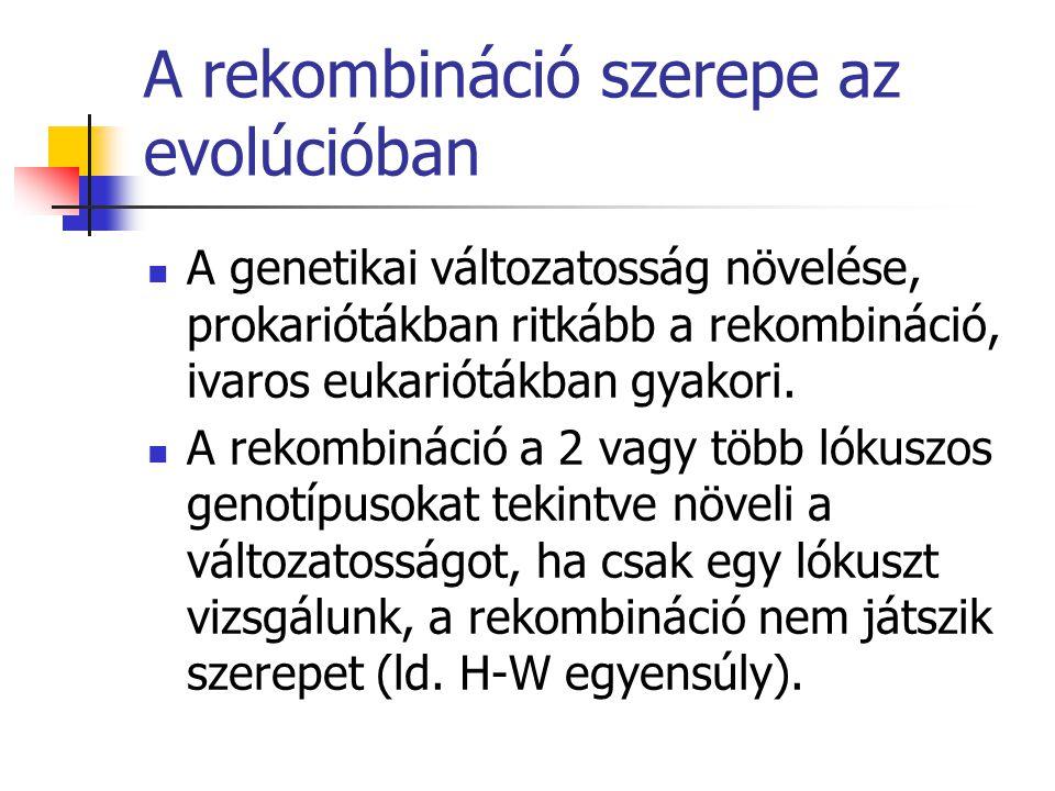 A rekombináció szerepe az evolúcióban A genetikai változatosság növelése, prokariótákban ritkább a rekombináció, ivaros eukariótákban gyakori. A rekom
