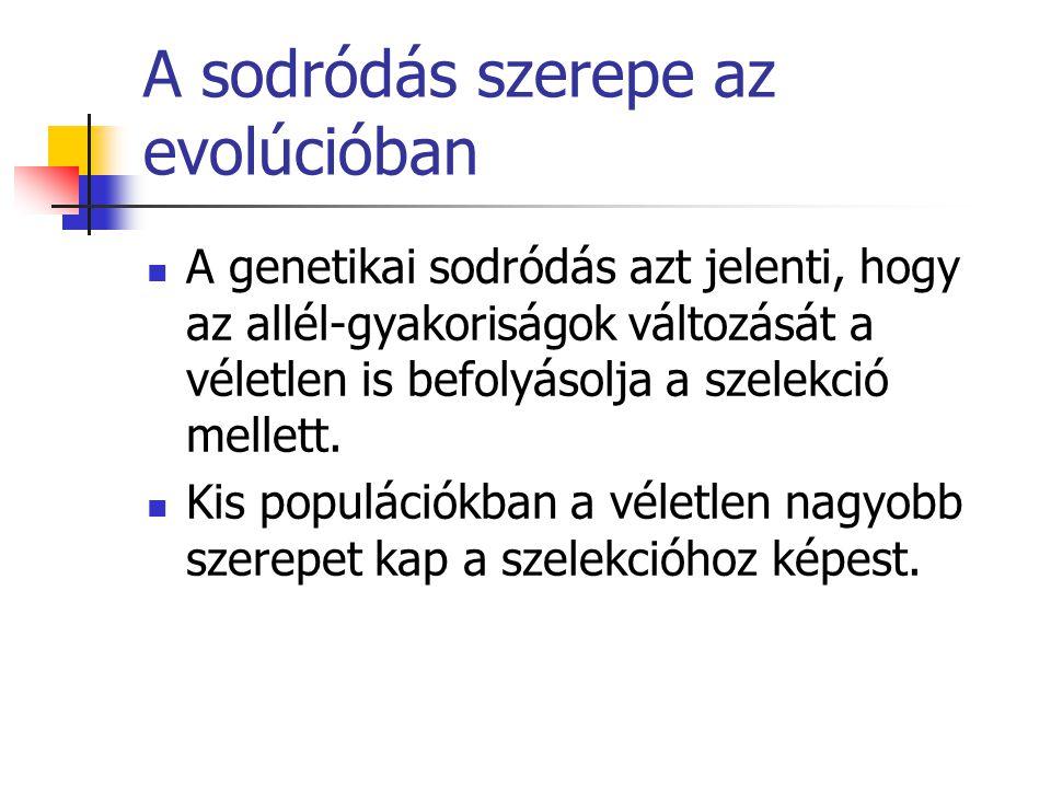 A sodródás szerepe az evolúcióban A genetikai sodródás azt jelenti, hogy az allél-gyakoriságok változását a véletlen is befolyásolja a szelekció melle