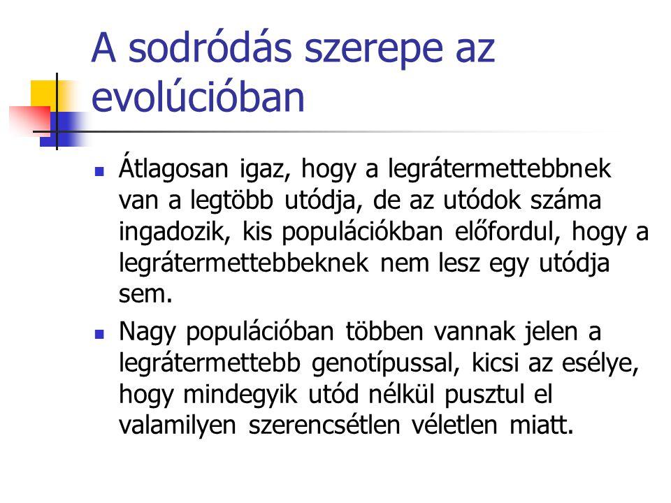 A sodródás szerepe az evolúcióban Átlagosan igaz, hogy a legrátermettebbnek van a legtöbb utódja, de az utódok száma ingadozik, kis populációkban előf