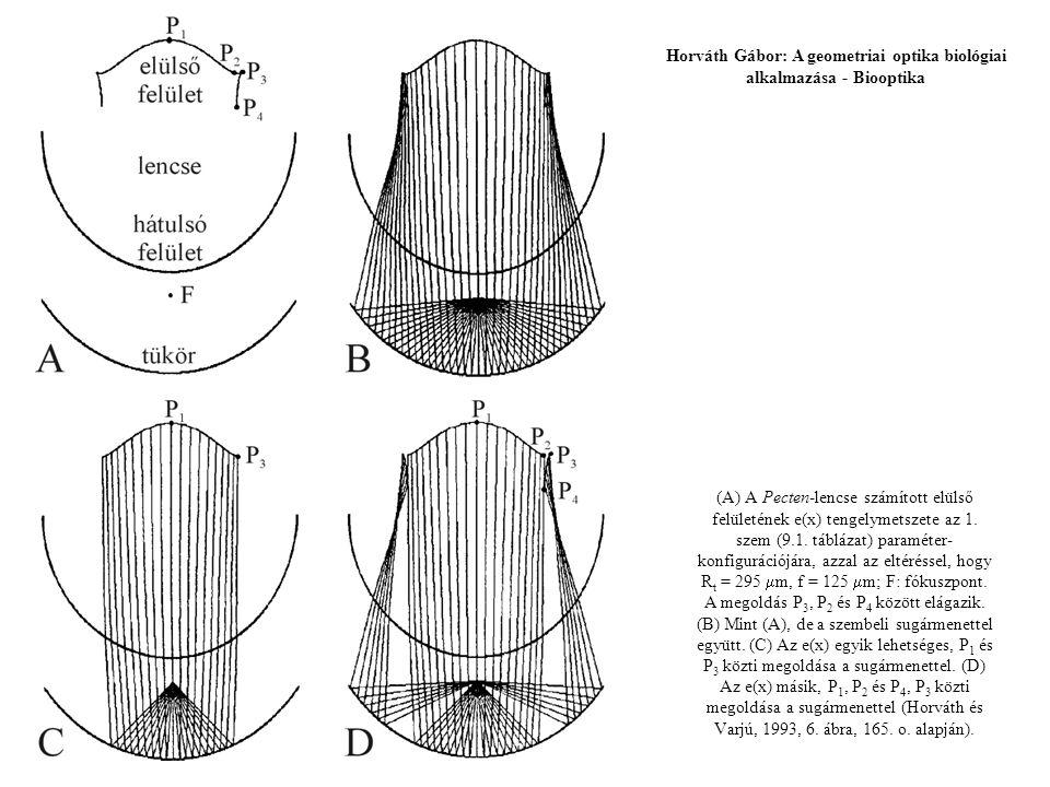 (A) A Pecten-lencse számított elülső felületének e(x) tengelymetszete az 1. szem (9.1. táblázat) paraméter- konfigurációjára, azzal az eltéréssel, hog