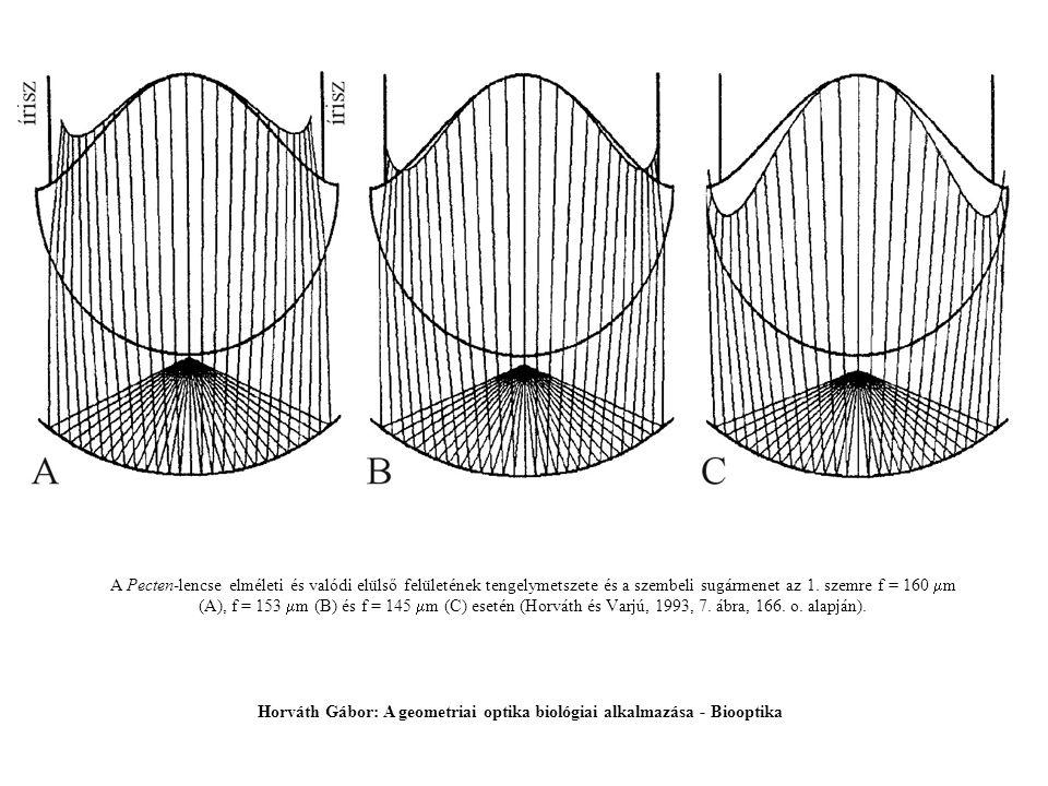 A Pecten-lencse elméleti és valódi elülső felületének tengelymetszete és a szembeli sugármenet az 1. szemre f = 160  m (A), f = 153  m (B) és f = 14