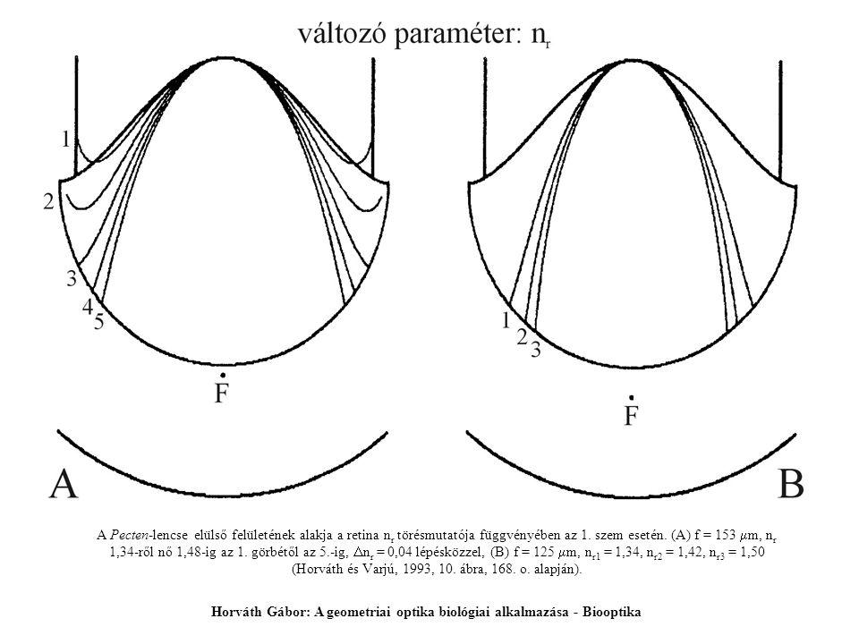 A Pecten-lencse elülső felületének alakja a retina n r törésmutatója függvényében az 1. szem esetén. (A) f = 153  m, n r 1,34-ről nő 1,48-ig az 1. gö