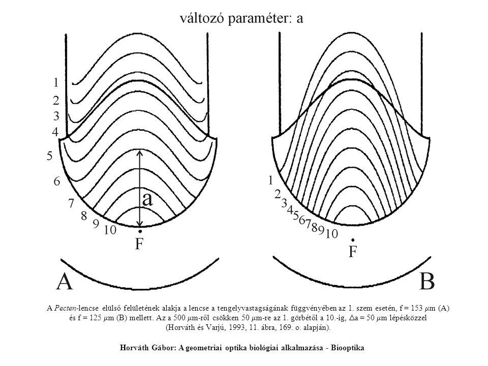 A Pecten-lencse elülső felületének alakja a lencse a tengelyvastagságának függvényében az 1. szem esetén, f = 153  m (A) és f = 125  m (B) mellett.