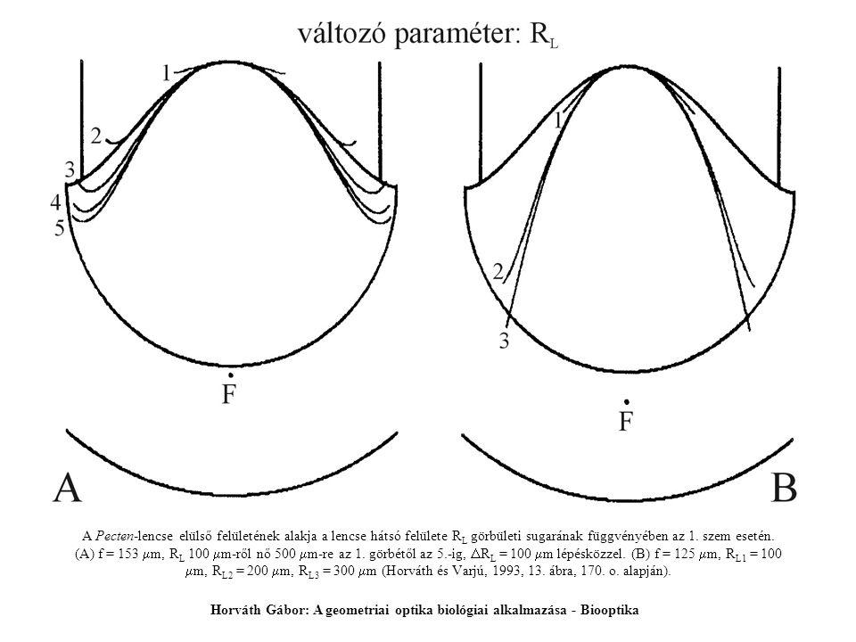 A Pecten-lencse elülső felületének alakja a lencse hátsó felülete R L görbületi sugarának függvényében az 1. szem esetén. (A) f = 153  m, R L 100  m