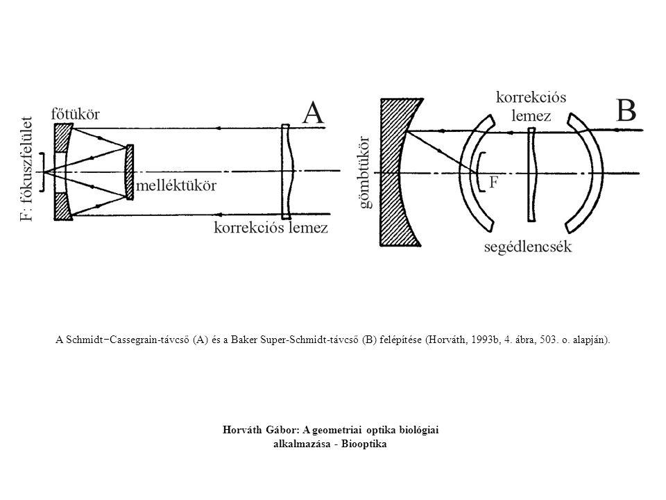 A Pecten-szem optikai modelljének keresztmetszete és egy paraxiálisan beeső fénysugár menete a szemben.