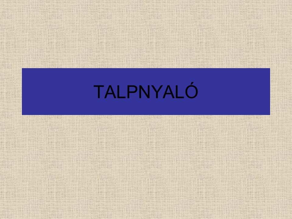 TALPNYALÓ