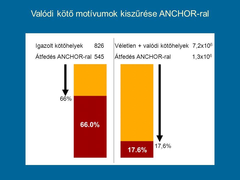 Valódi kötő motívumok kiszűrése ANCHOR-ral Igazolt kötőhelyek826 Átfedés ANCHOR-ral545 Véletlen + valódi kötőhelyek 7,2x10 6 Átfedés ANCHOR-ral 1,3x10 6 66% 17,6%