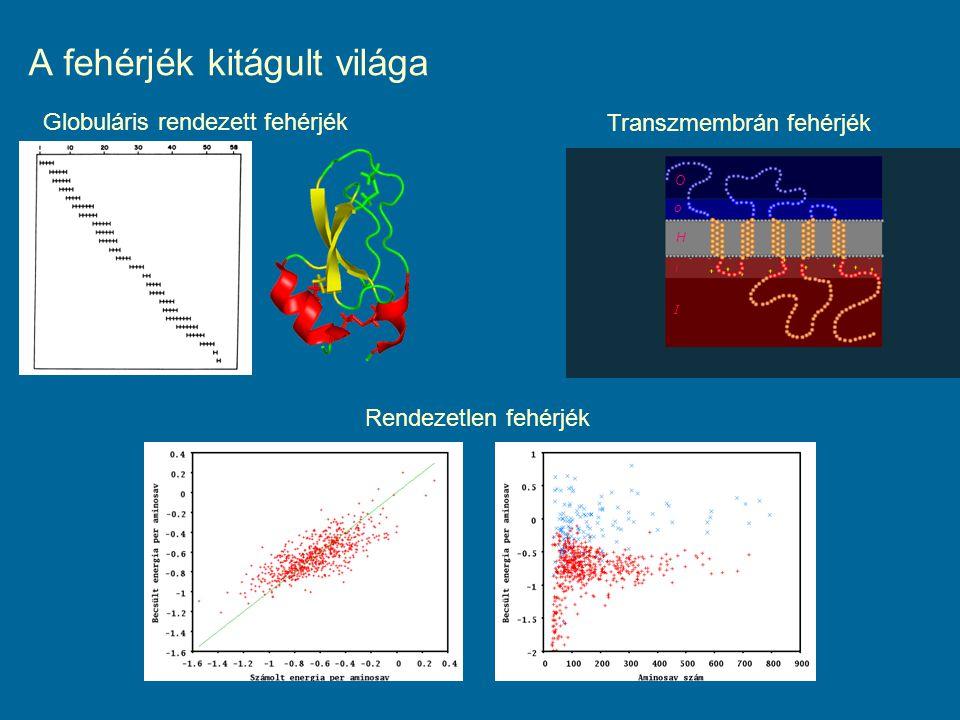 A fehérjék kitágult világa I Globuláris rendezett fehérjék Transzmembrán fehérjék Rendezetlen fehérjék i H O o