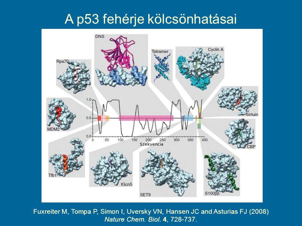 Fuxreiter M, Tompa P, Simon I, Uversky VN, Hansen JC and Asturias FJ (2008) Nature Chem. Biol. 4, 728-737. A p53 fehérje kölcsönhatásai