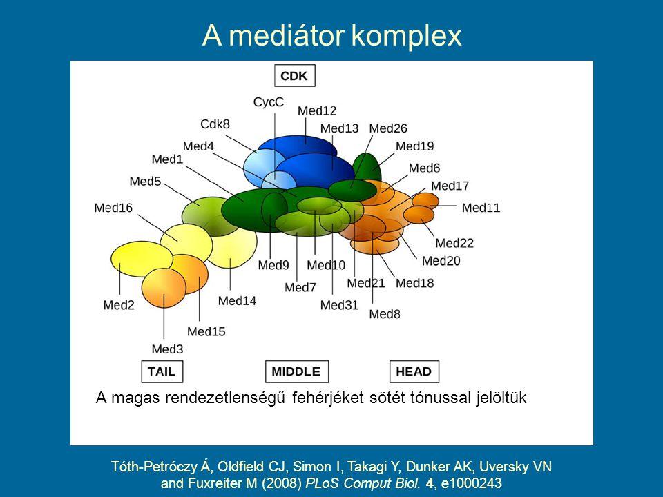 A mediátor komplex Tóth-Petróczy Á, Oldfield CJ, Simon I, Takagi Y, Dunker AK, Uversky VN and Fuxreiter M (2008) PLoS Comput Biol.