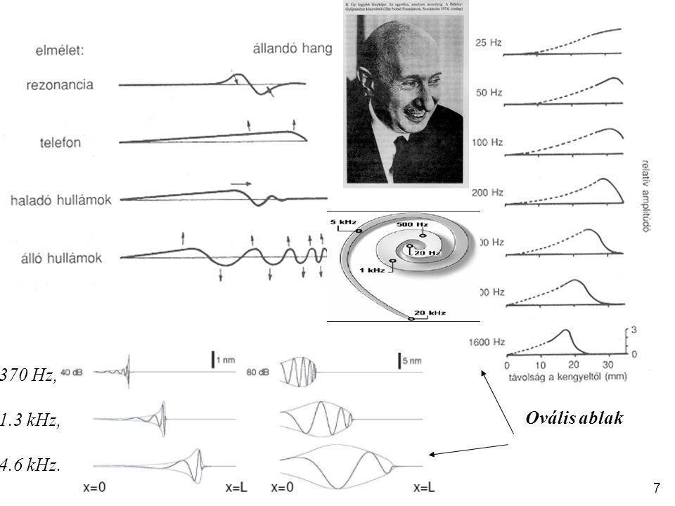 Ovális ablak 370 Hz, 1.3 kHz, 4.6 kHz. 7