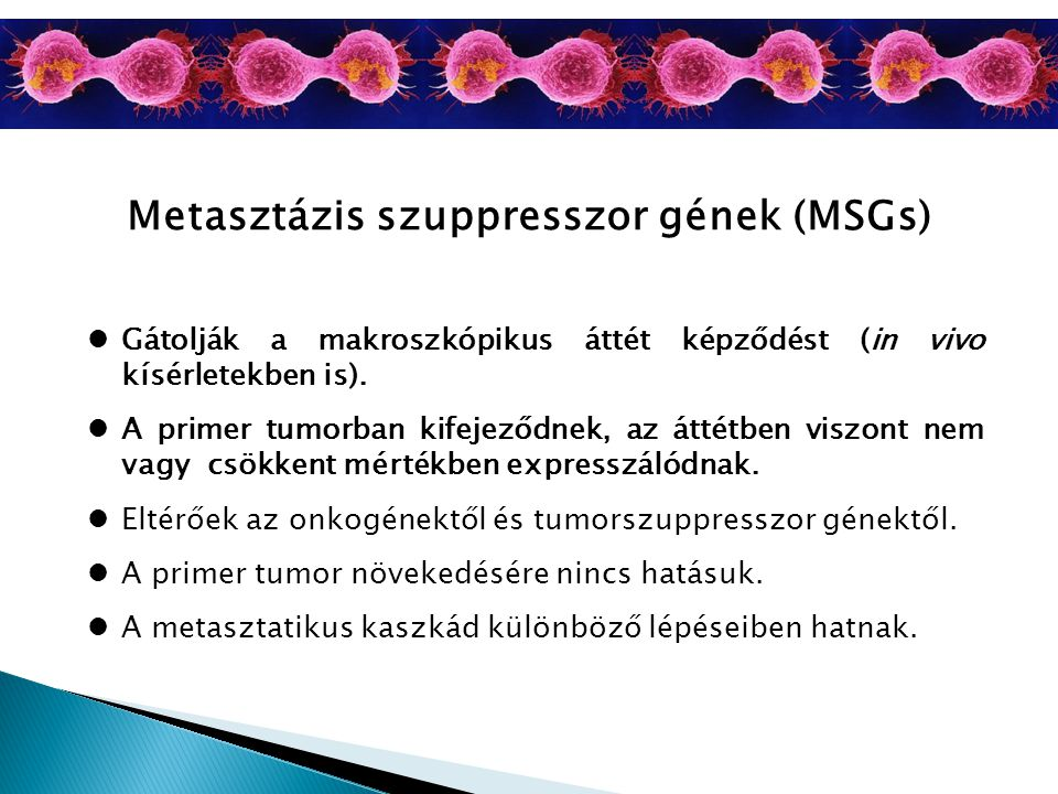 Metasztázis szuppresszor gének (MSGs) Gátolják a makroszkópikus áttét képződést (in vivo kísérletekben is). A primer tumorban kifejeződnek, az áttétbe